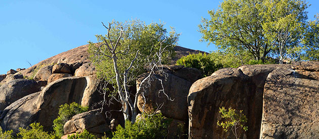 The Vegetation of Mountain Zebra National Park, SANParks, www.eastern-cape-info.co.za