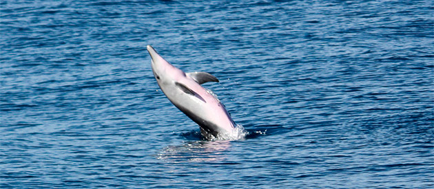 Dolphin Encountours Research Center - Ponta do Ouro - Mozambique